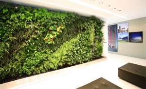 Xu hướng thiết kế thi công nội thất mới vơi bức tường xanh