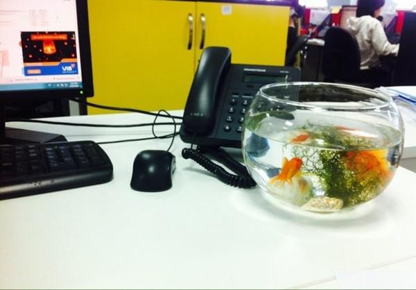 bể cá trong phòng làm việc